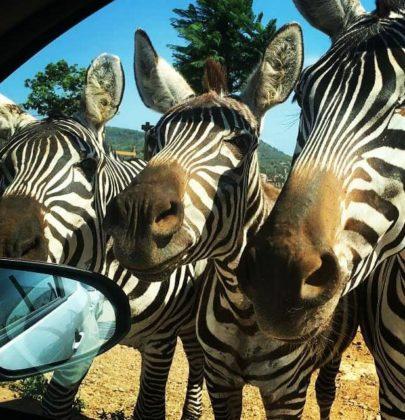 Safari Zoo na Majorce