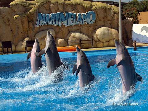 marineland 2