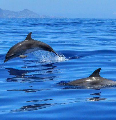 Delfiny na Majorce – niezwykła atrakcja nie tylko dla dzieci