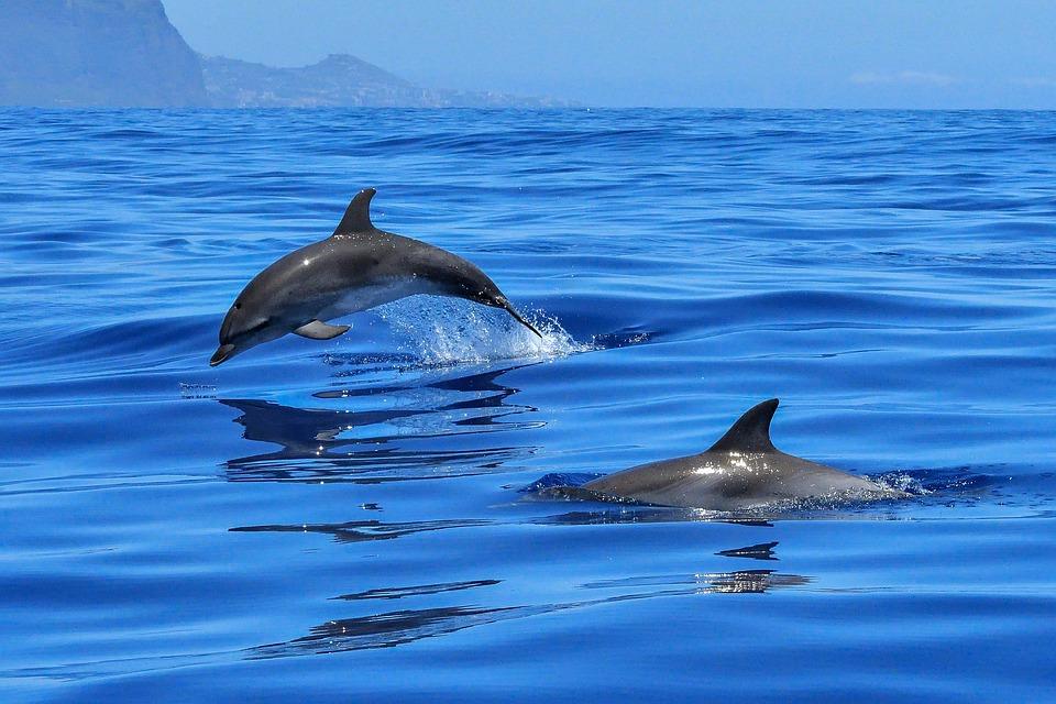 delfiny na majorce