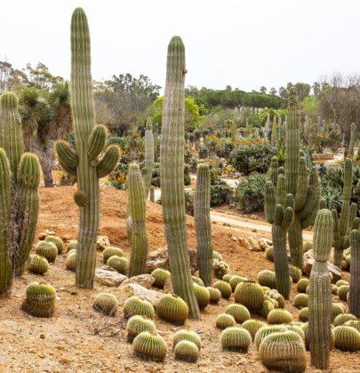 Botanicactus – ogród botaniczny z kaktusami